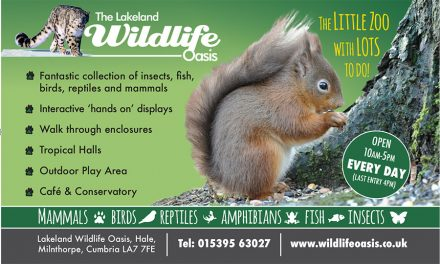 The Lakeland Wildlife Oasis