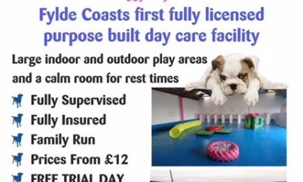 Woofy Warehouse – Doggy Day Care